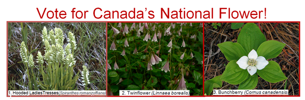 national_flower